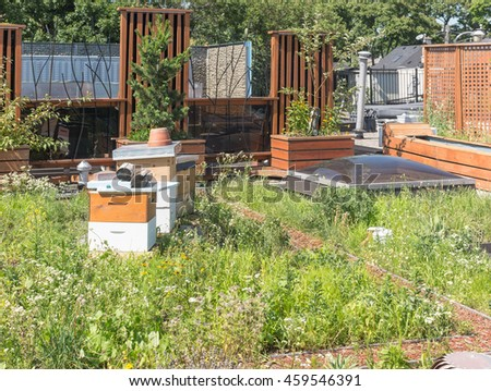 Rooftop garden in urban setting with beehives