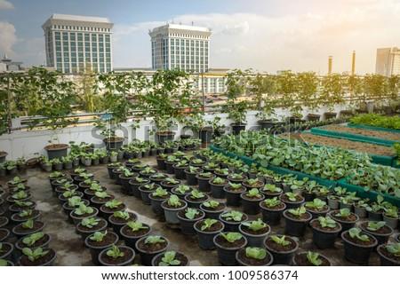 Rooftop Garden Rooftop Vegetable Garden Growing Stock Photo (Royalty Free)  1009586374   Shutterstock