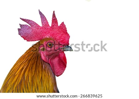 Rooster Head  on white background - stock photo