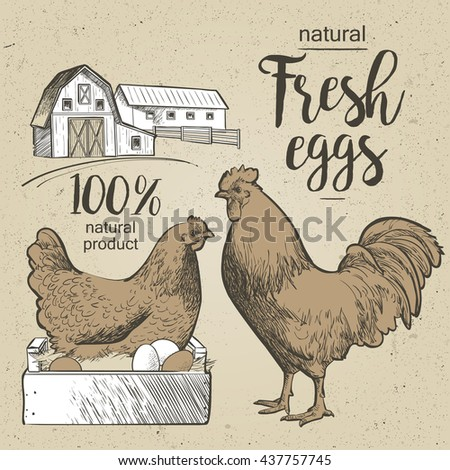 Roosterchicken and eggs.  illustration in vintage style. - stock photo