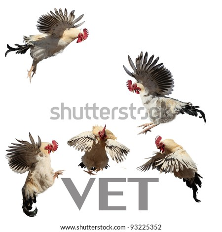 Roosters in flight.