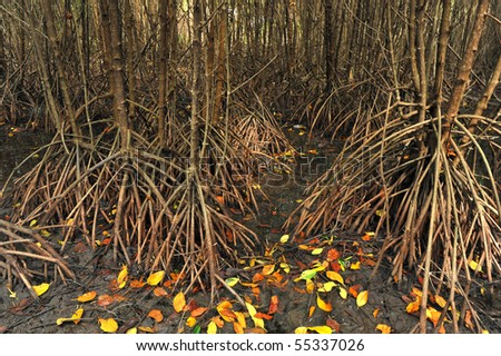root of mangrove - stock photo
