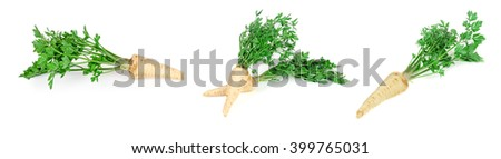 Root parsley on a white background