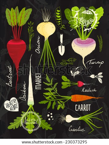 Root Vegetables with Leafy Tops Set for Design on Blackboard. Colorful vegetable collection on textured blackboard illustration. Raster variant - stock photo