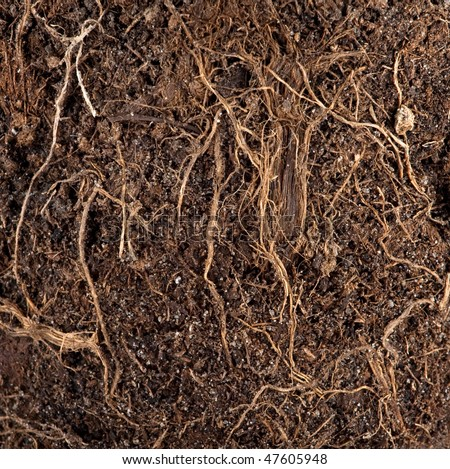 Roots in a soil background - stock photo