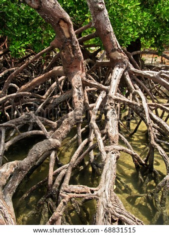 roots in mangrove forest - stock photo