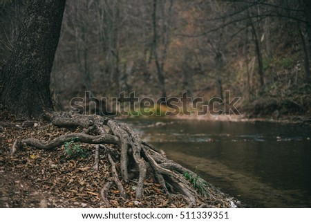 Roots of a tree by the mountain river