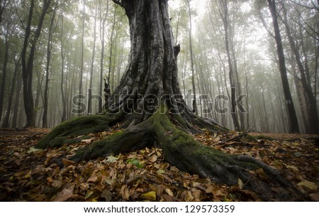 roots of a tree in a foggy forest - stock photo