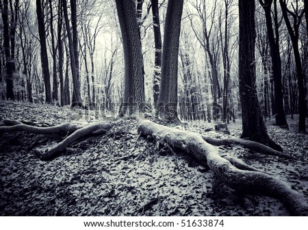 roots of a tree in a forest - stock photo