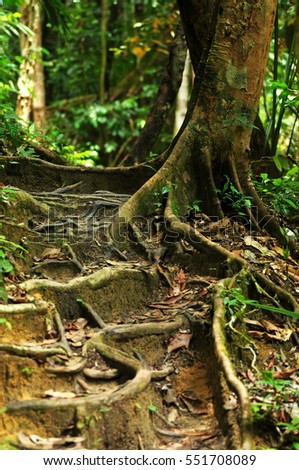 Roots of a tree in tropical jungle.