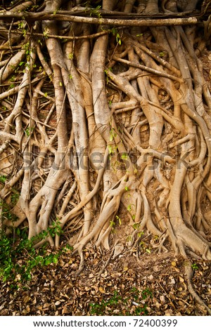 Roots of tree abstract - stock photo