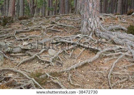 roots of tree in a forest