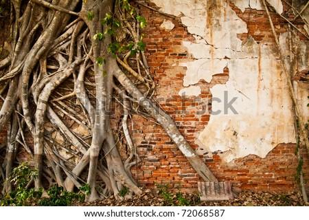 Roots on ruin brick wall - stock photo