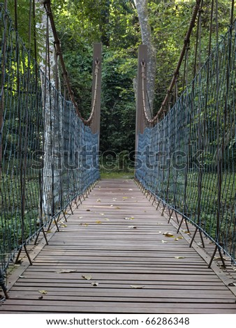 Rope bridge in the forest.