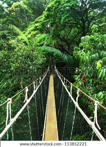 rope bridge in the jungle - stock photo