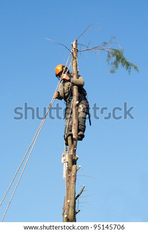 ropes and harness hold man safe in tree being felled - stock photo