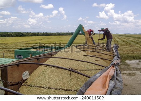 RORAIMA, BRAZIL, AUGUST 27, 2004. Combine transferring soybeans into a truck after harvest - stock photo