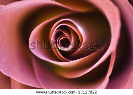 Rosa, Leonaides - stock photo