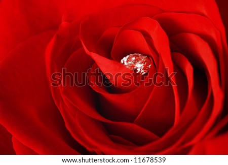 Rose and diamond. Diamond is slightly covered with dew. - stock photo