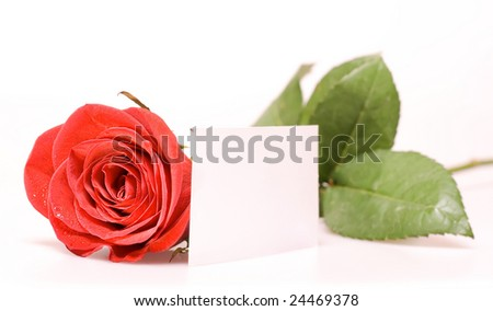 Rose and emty card - stock photo