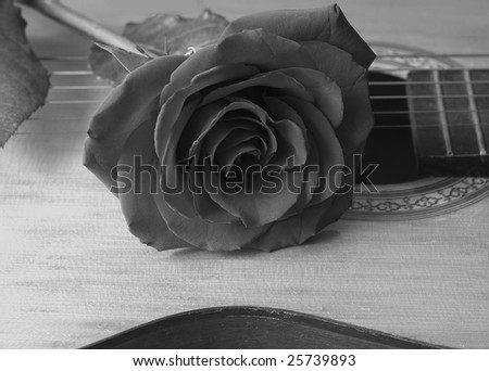 rose and guitar - stock photo
