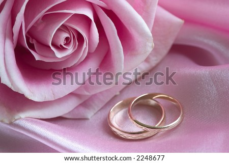 rose and wedding bands on pink - stock photo