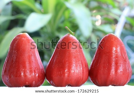 Rose apples on green leaf