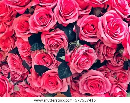 Rose Background Wallpaper Valentine Day Grain Stock Photo ...