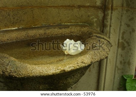 Rose Bath - stock photo