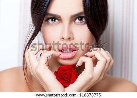 Rose beauty - stock photo
