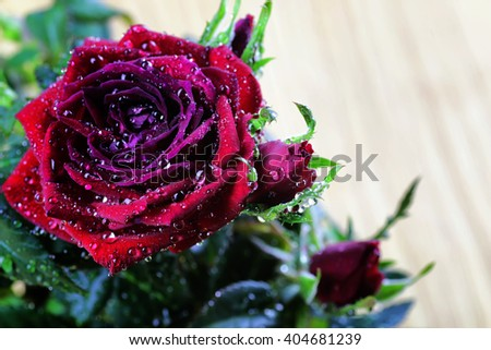 Rose bud drop macro - stock photo