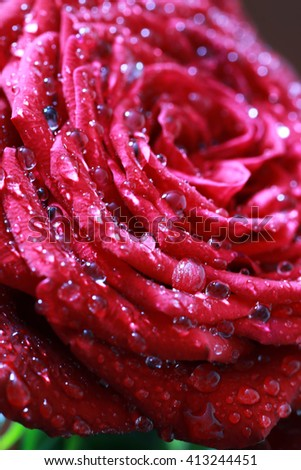 rose bud macro drop - stock photo