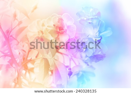 Rose bush with lots of pink roses blossom - stock photo