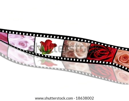 Rose collection on film strip