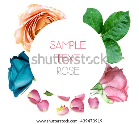 Rose collection with space and sample text - stock photo