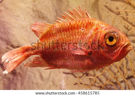 Redfish stock images royalty free images vectors for Fish taxidermy near me