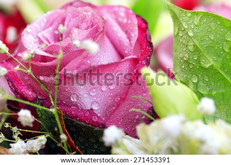 rose flower bouquet of red nature - stock photo