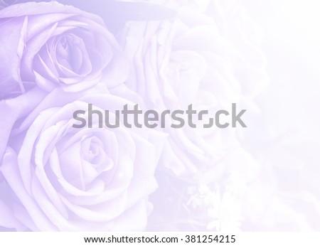 rose flower filters rose background design - stock photo