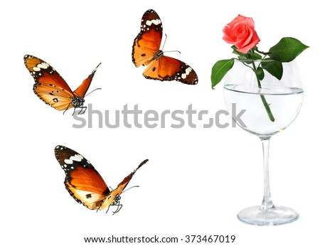 Rose flower in the glass and butterflies flying. Isolated on the white background  - stock photo