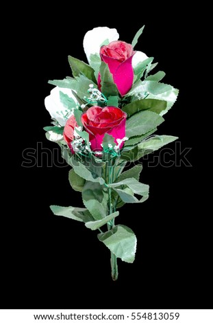 Rose Flower  isolated on over black background