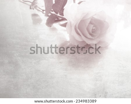 Rose flower on white table with copy space - stock photo