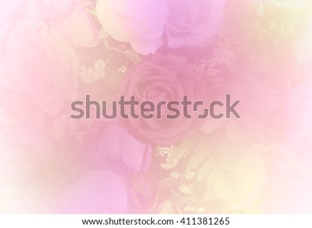rose flower rose background color filter. - stock photo