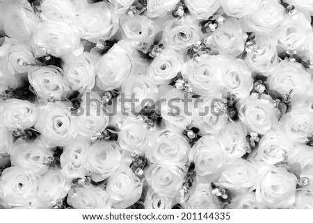 Rose flowers background in black & white - stock photo
