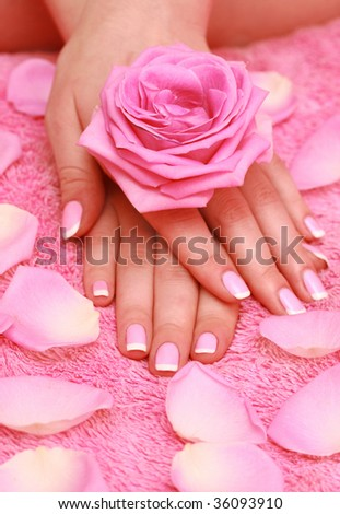 rose for female hands - stock photo