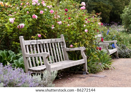 Rose garden in the park with empty wooden bench. Hyde Park, London - stock photo