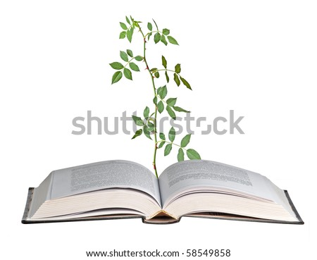 Rose growing from a book