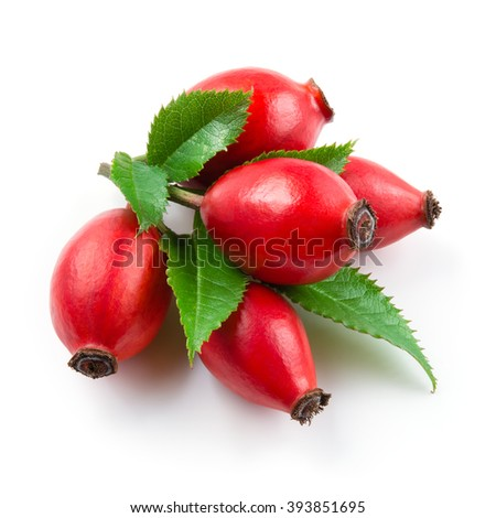 Rose hip isolated on a white background. - stock photo