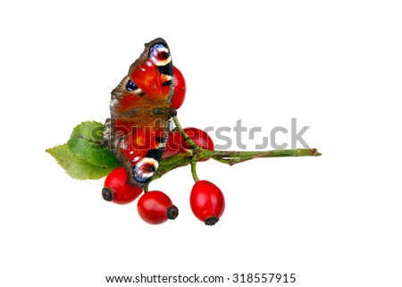 Rose hips and butterfly on white isolated background - stock photo
