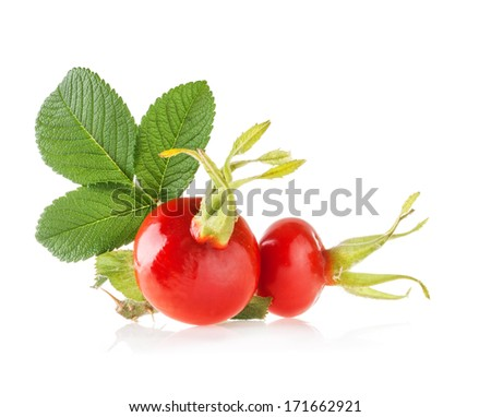 Rose hips isolated on white background - stock photo