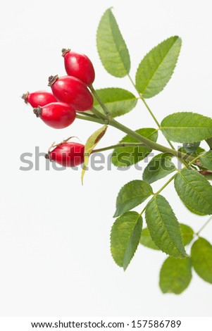 Rose hips with leaves - stock photo